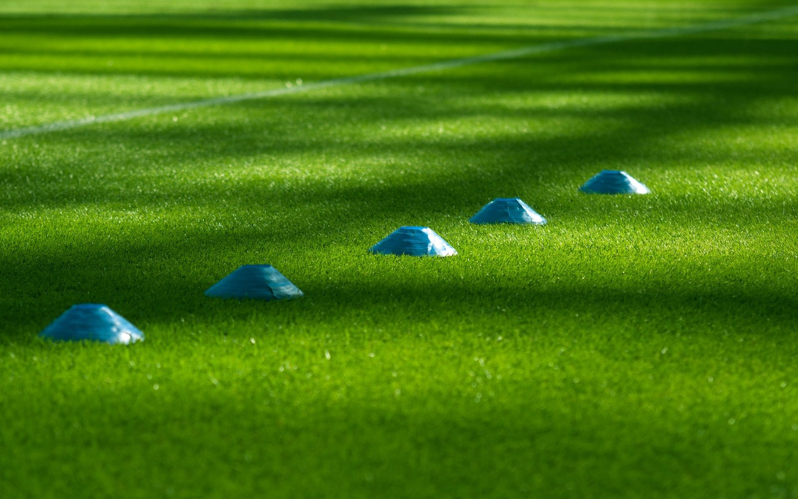 Cones on green grass